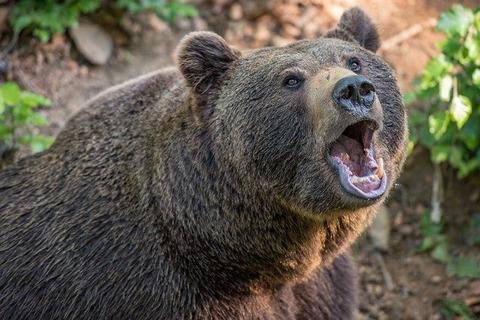 bear-3405945_640