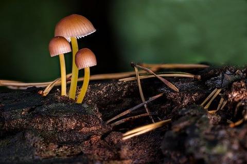 mushroom-3647871_640
