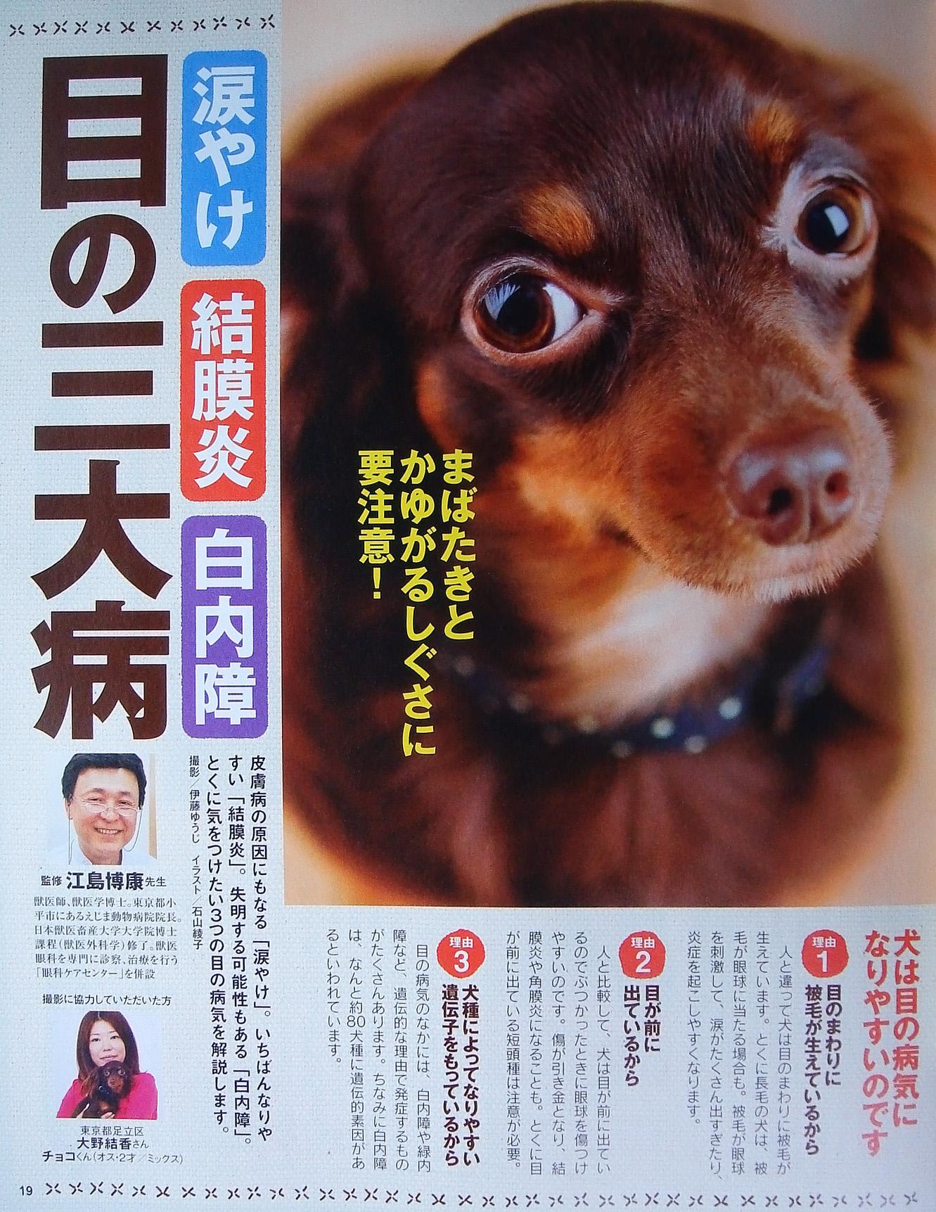 東京ウエスト動物病院 - Blog::2008年04月
