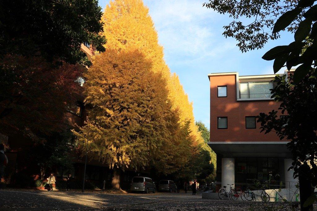 花咲かすおじさん : 東京大學銀杏-6 東大病院から見るスカイ ...