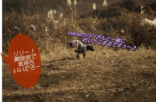 銀座トイプードルリリーas know as de wan19