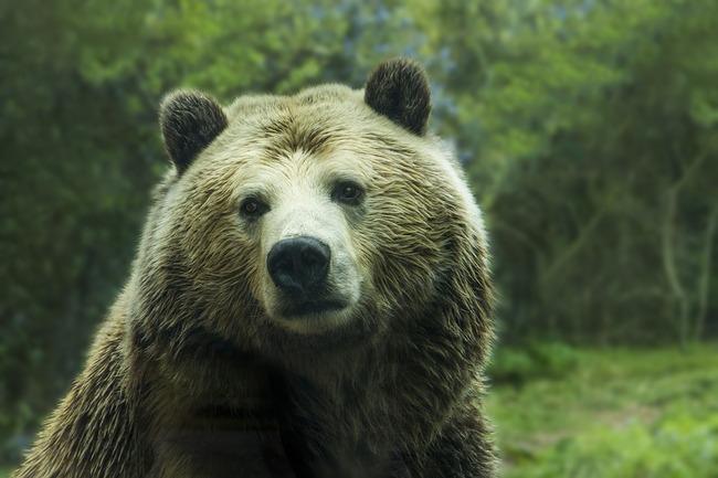 bear-1245807_960_720