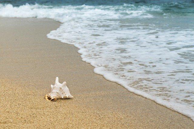 shellfish-3062011_640