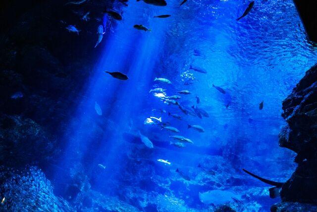 「水を得た魚」の反対wwwww - ゴールデンタイムズ