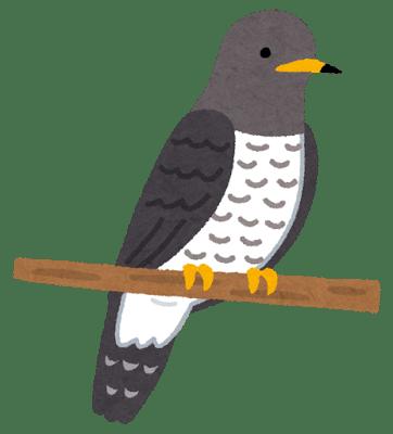 bird_hototogisu
