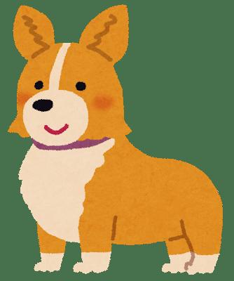 dog_corgi