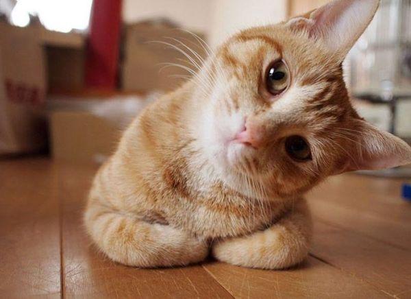 おもしろ猫画像ハムスター速報