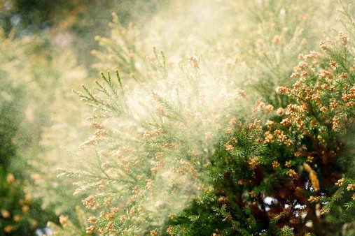 Images liées à pollinosis window pollin-01