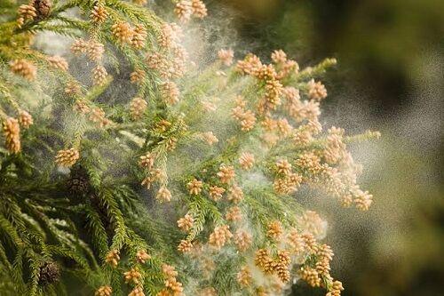 暖冬 花粉 飛散に関連した画像-01