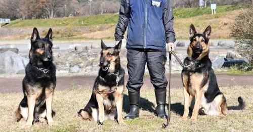 兵庫県警 警察犬 行方不明 逃走に関連した画像-01