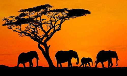 アフリカ 奈良 鹿 奈良公園に関連した画像-01