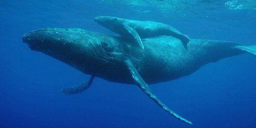 商業捕鯨再開デモに関連した画像-01