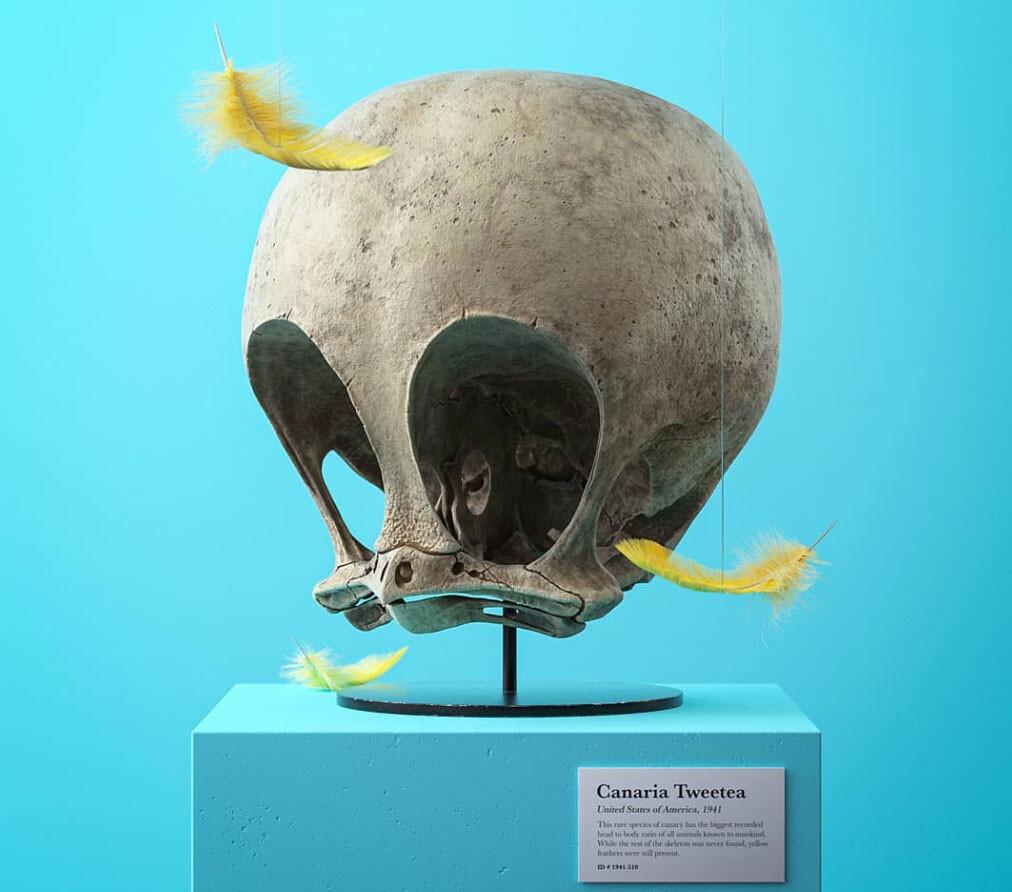 キャラクターの化石標本