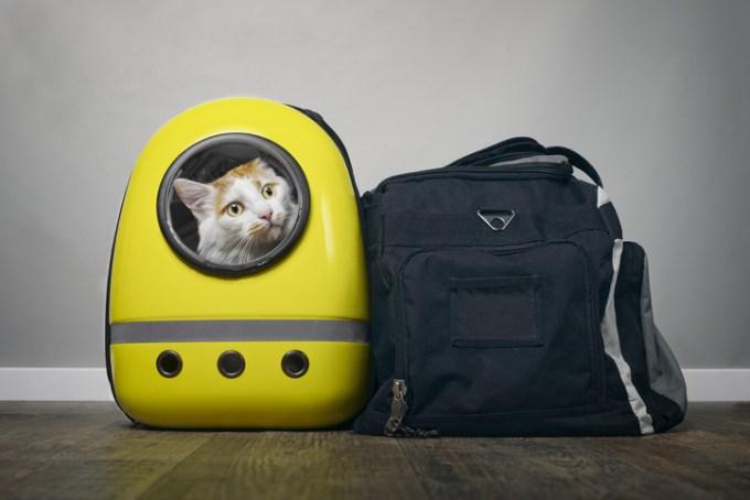 友人たちがこぞって猫を連れてきた理由とは?