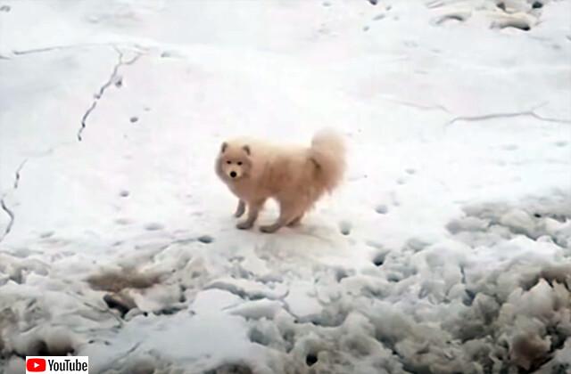 流氷に取り残されてしまった犬が無事救助される(ロシア)