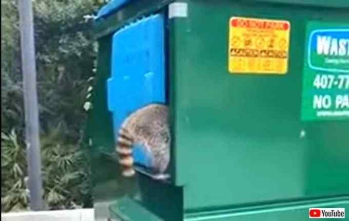 dumpster0_640