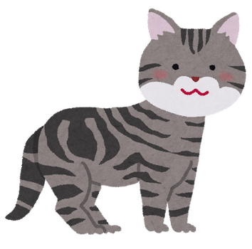 cat_american_shorthair