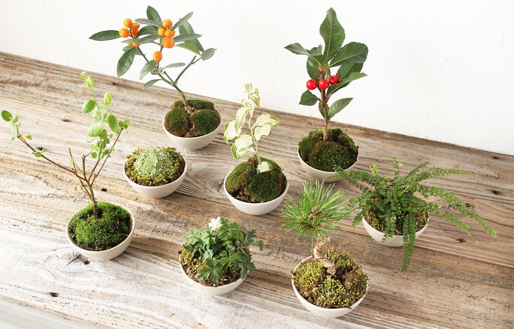 花嫁DIY♪ 初心者でも簡単に作れるミニ盆栽の席札&プチギフト ...