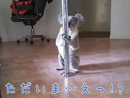 コアラのポールダンス00