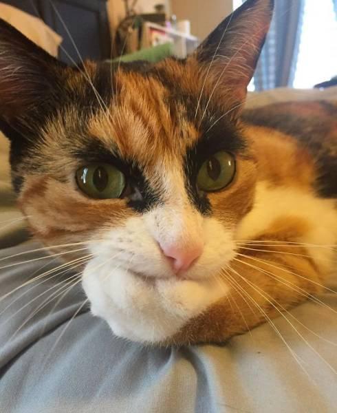 本気の猫03