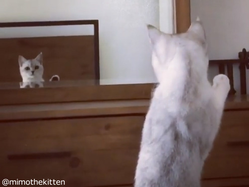 """自分の""""耳""""の存在に初めて気づいた猫00"""