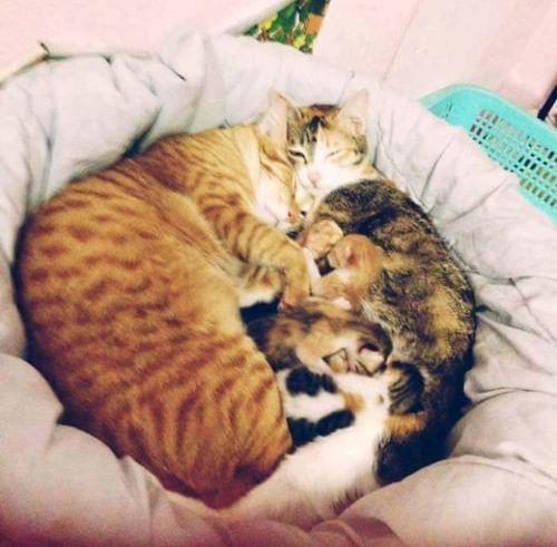 家族愛の強いパパ猫06
