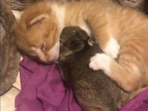 猫の赤ちゃん、ウサギの赤ちゃんを抱きしめる00