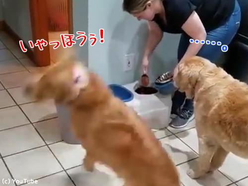 ご飯を待つとき同じ犬種でもこんなに違う00