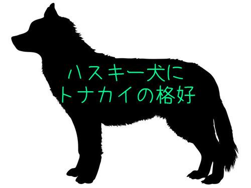 目つきの鋭いハスキー犬にトナカイ衣装00