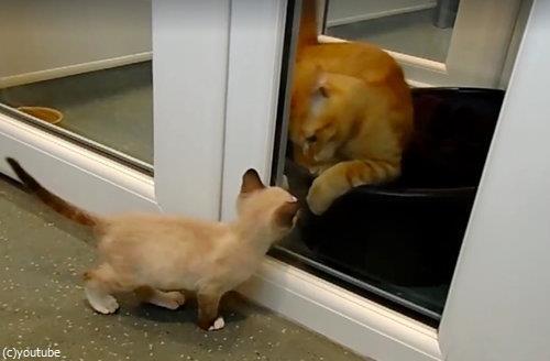 ガソリンスタンドに捨てられていた子猫11