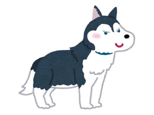 ハリネズミ犬
