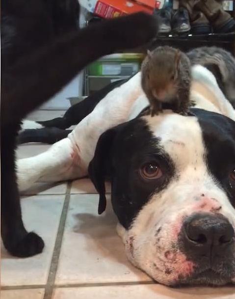 猫からリスを守る犬03