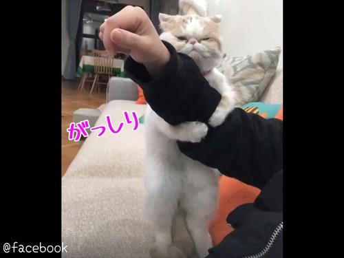 飼い主さんを離さない猫00