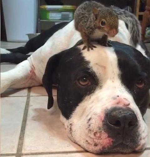 猫からリスを守る犬01