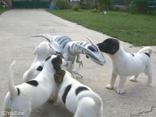 ロボ恐竜に戦いを挑む子犬たち00