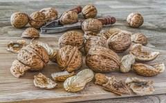 nuts-2971675__340