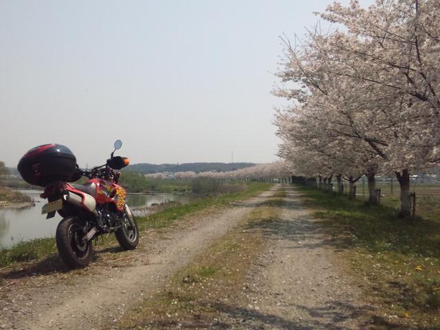 bike_1395920969_2602_m
