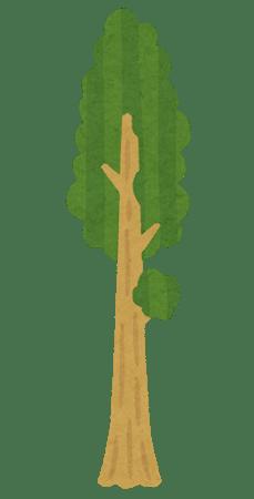 tree_sequoia