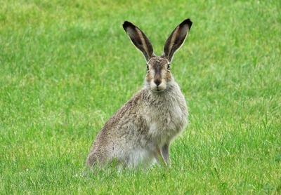 rabbit-2414356_1280