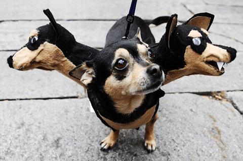 犬 ケルベロス