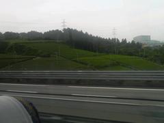 たぶん牧之原台地の茶畑