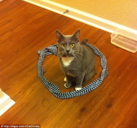 1414767453693_Image_galleryImage__Cat_circles_Images_from_