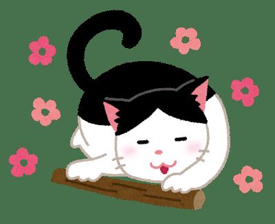 cat_matatabi