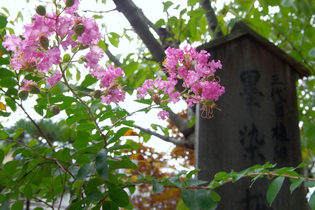 墨染櫻寺 : 京都秘封探訪