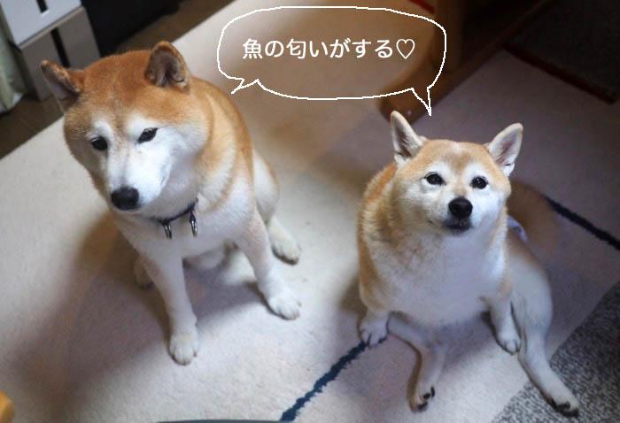 26日夕ブログ2