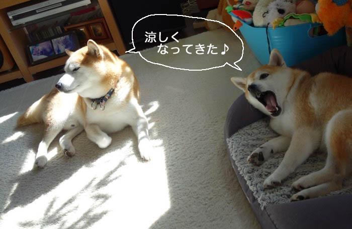 29日夕ブログ2