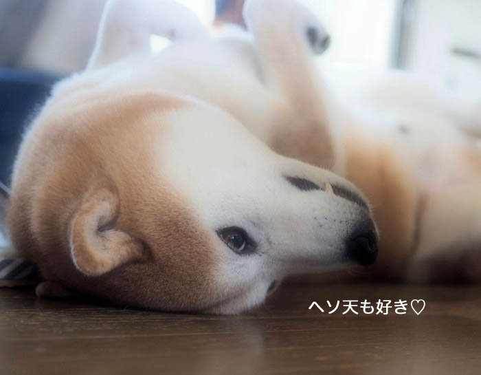 15日夕ブログ5