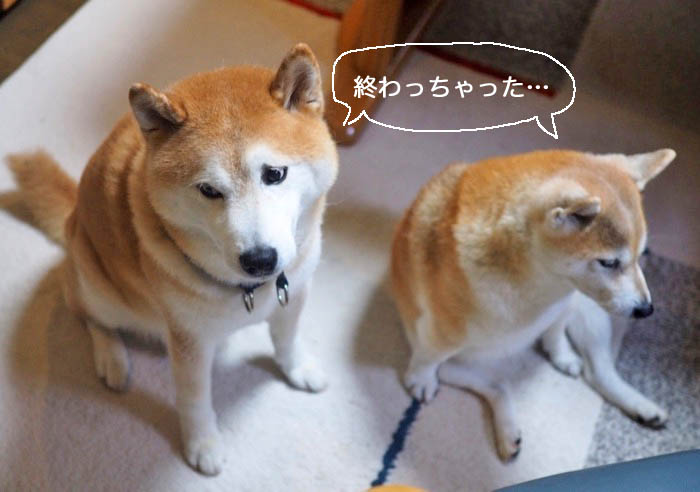 26日夕ブログ9