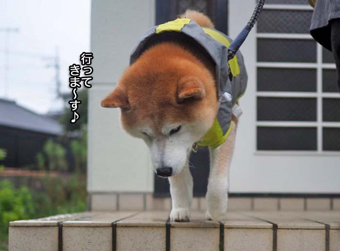 5日夕ブログ6