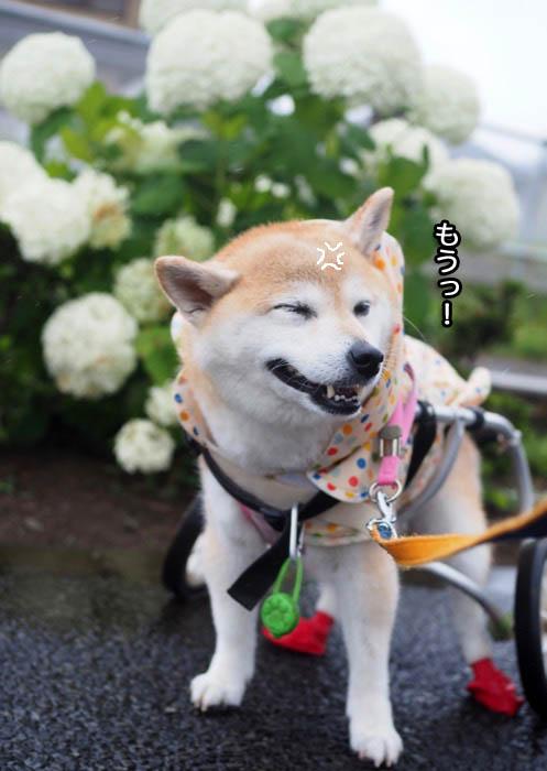 19日夕ブログ8